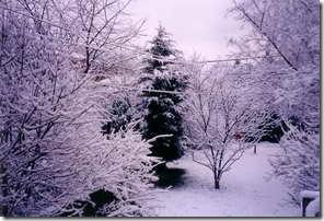 winnett_winter