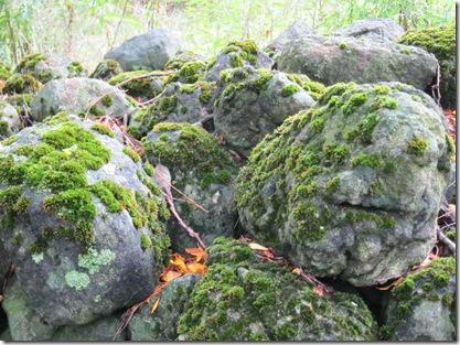 emerald moss_0022_1_resize